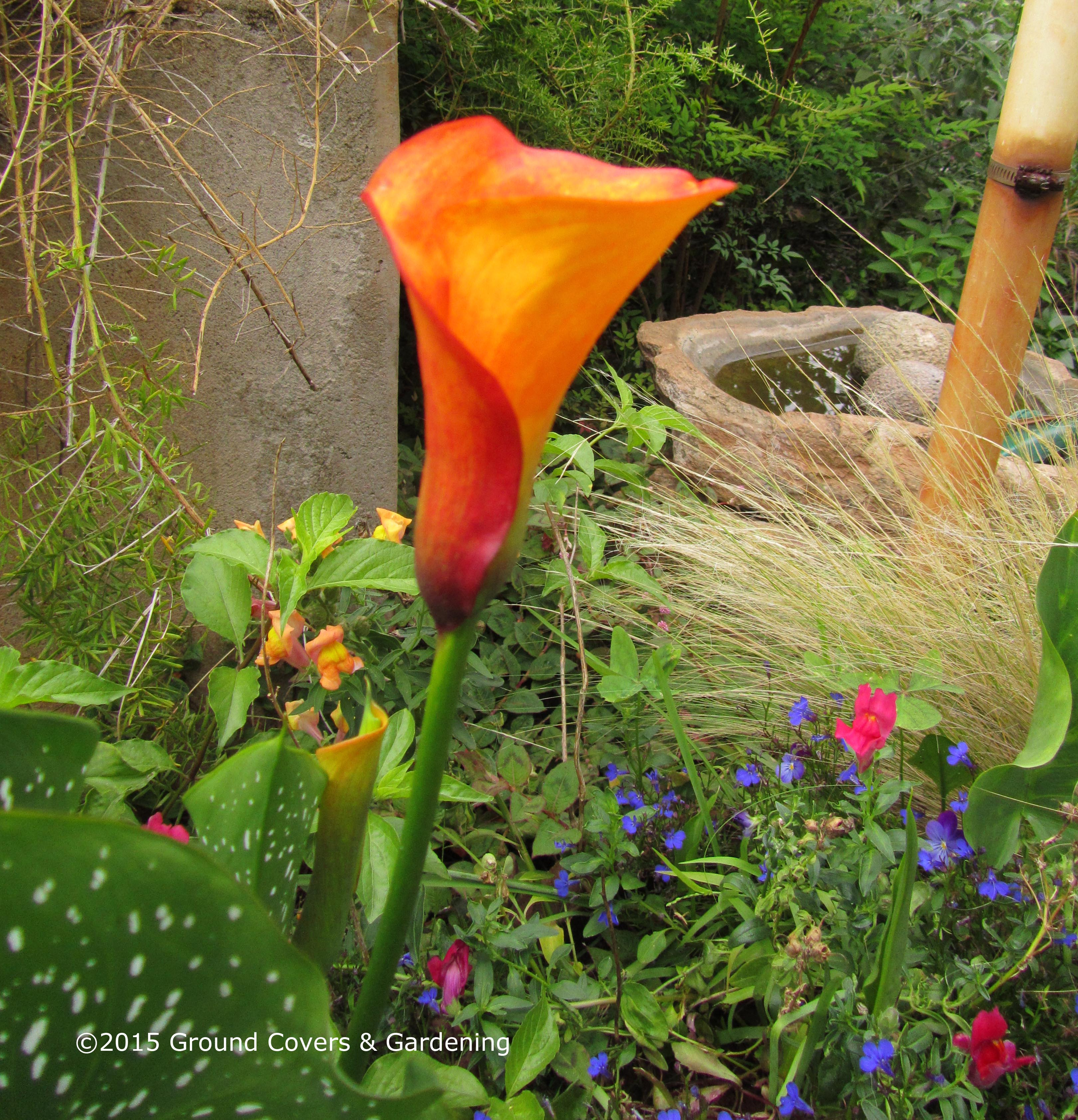 Spring flower bulbs mightylinksfo