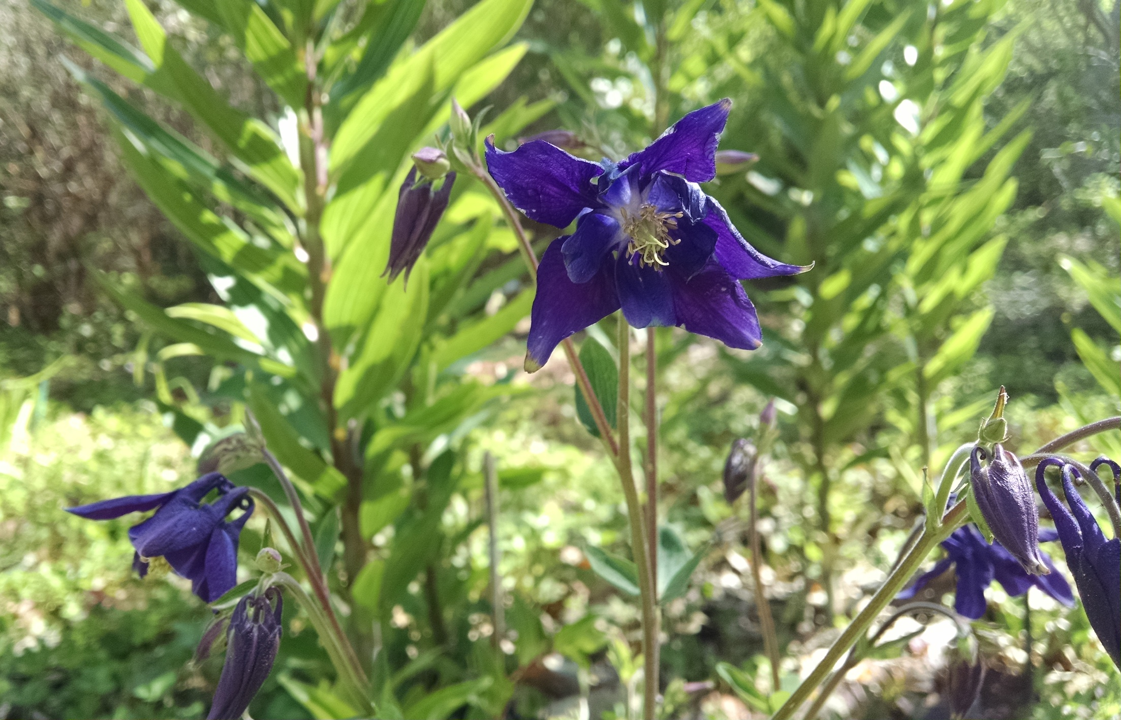 Perennial Flowers That Grow In Shade